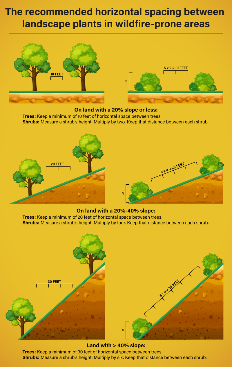 infographic depicting the recommended spacing for plants and trees for wildfire-prone areas