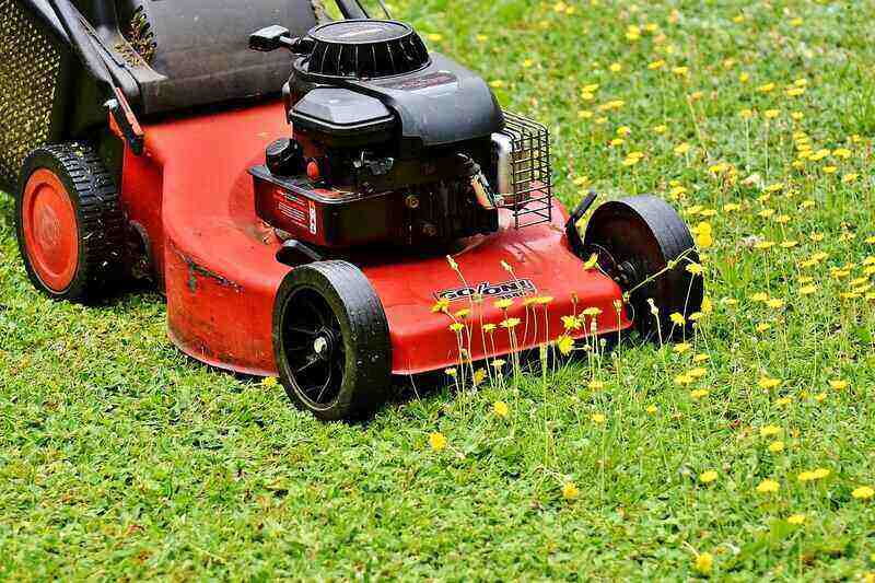 lawn mower cutting grass and dandelion weeds