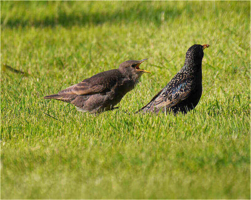 two birds standing in the grass