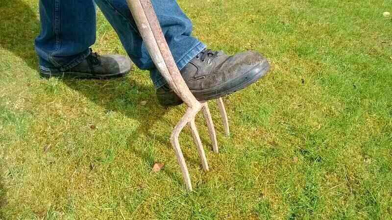 person manually aerating a grass area using a pitch fork