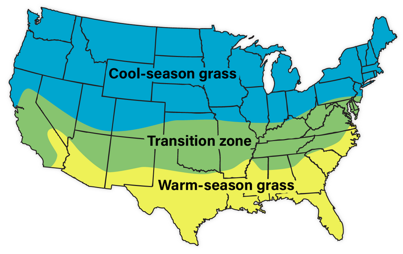 infographic showing the cool and warm season grasses on the US map, along with the transitional zone