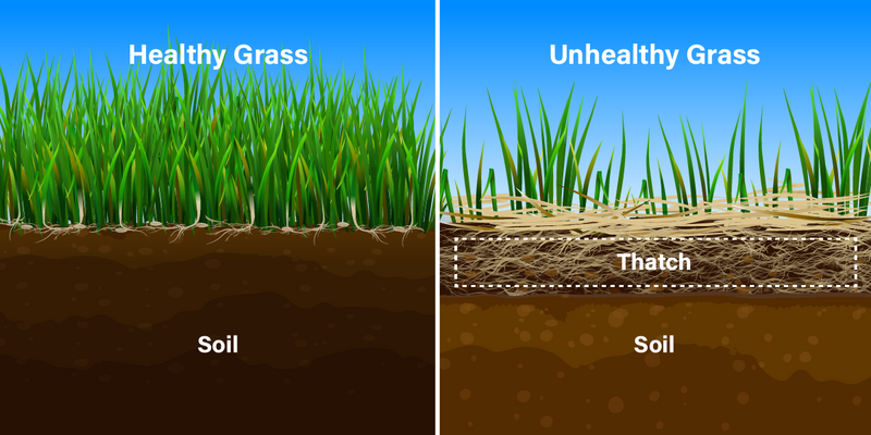 Graphic explaining thatch on grass