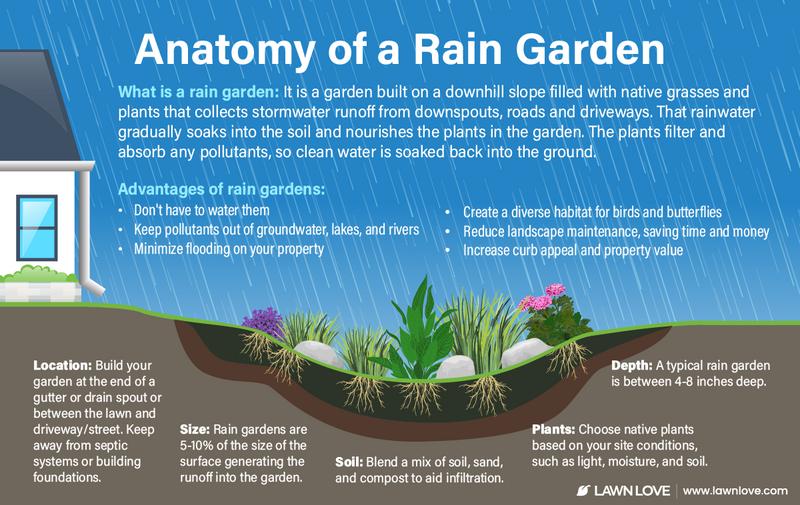 infographic explaining how a rain garden works