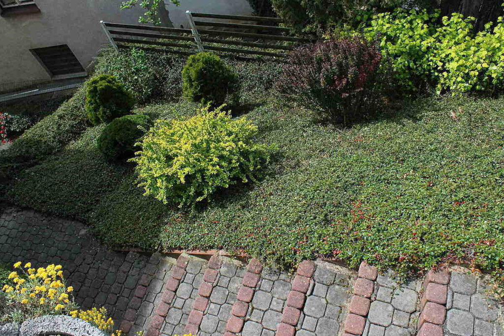 ground cover alongside a stone stairway, with ornate bushes throughout