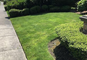 Best Lawn Aeration Service In Seattle Easy Quote Online Love